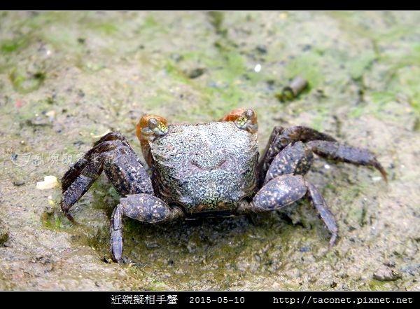近親擬相手蟹_05.jpg