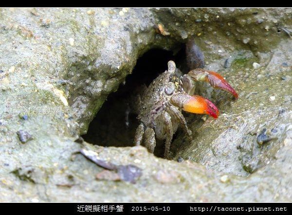 近親擬相手蟹_08.jpg