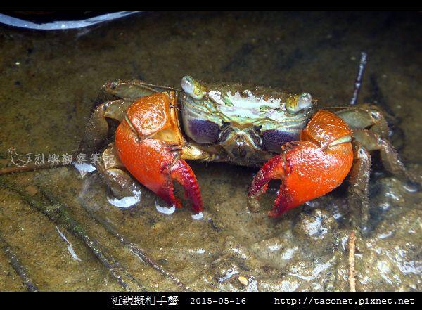 近親擬相手蟹_09.jpg