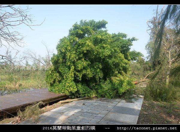 2016莫蘭蒂颱風肆虐後的烈嶼_033.jpg