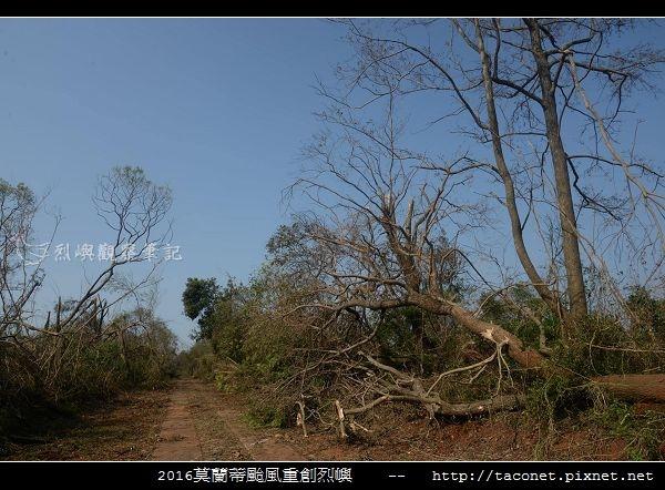 2016莫蘭蒂颱風肆虐後的烈嶼_045.jpg