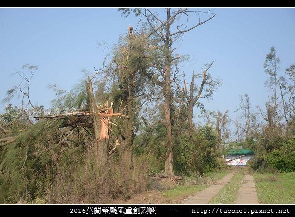 2016莫蘭蒂颱風肆虐後的烈嶼_050.jpg