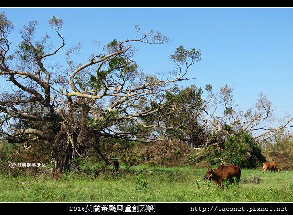 2016莫蘭蒂颱風肆虐後的烈嶼_062.jpg