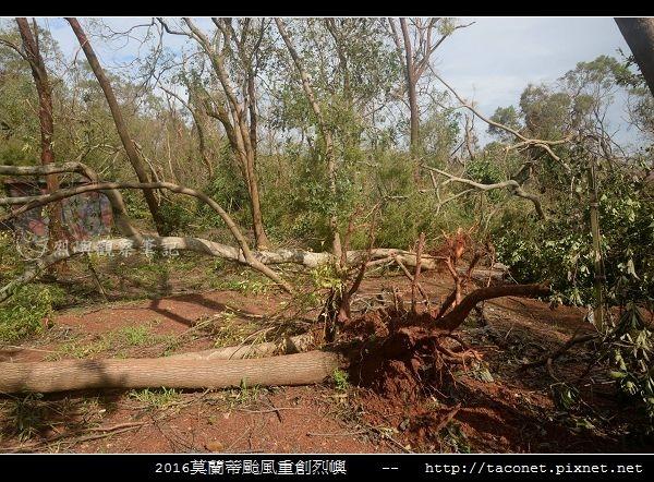 2016莫蘭蒂颱風肆虐後的烈嶼_080.jpg