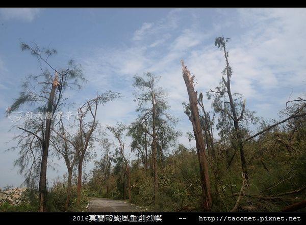 2016莫蘭蒂颱風肆虐後的烈嶼_084.jpg