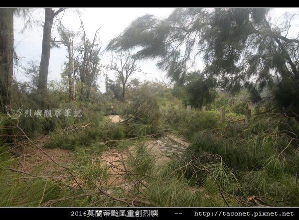 2016莫蘭蒂颱風肆虐後的烈嶼_085.jpg