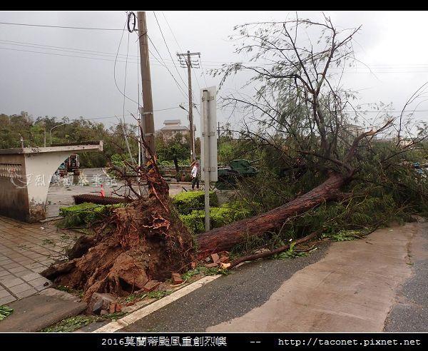 2016莫蘭蒂颱風肆虐後的烈嶼_093.jpg