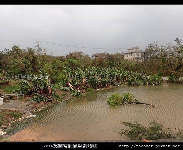 2016莫蘭蒂颱風肆虐後的烈嶼_094.jpg