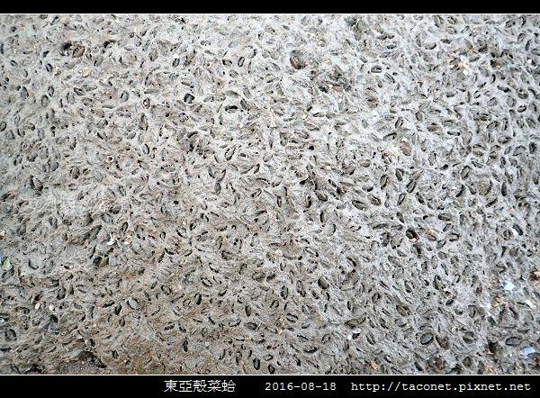 東亞殼菜蛤_09.jpg
