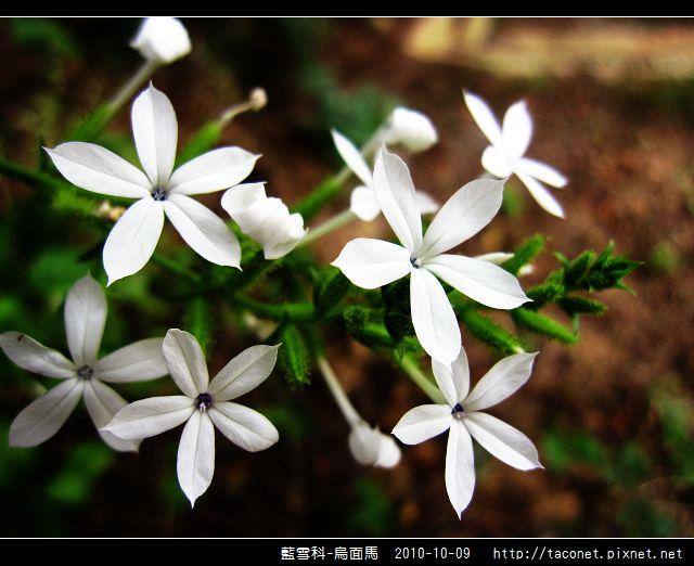 藍雪科-烏面馬_13.jpg
