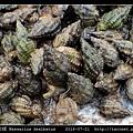 秀麗織紋螺 Nassarius dealbatus_4.jpg