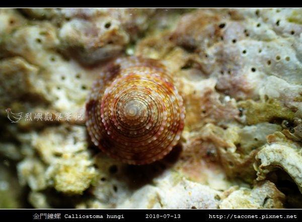 金門鐘螺 Calliostoma hungi _10.jpg