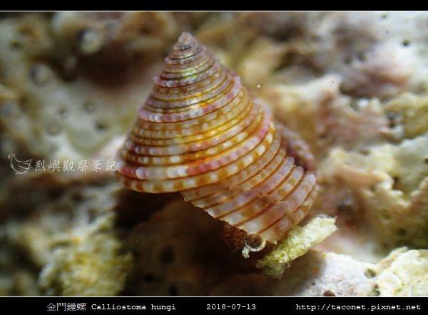 金門鐘螺 Calliostoma hungi _11.jpg