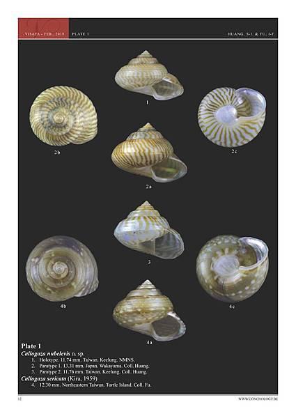 01- Huang & Fu- Margaritidae and Calliostomatidae_頁面_08.jpg