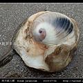 南洋扁玉螺  Sinum javanicum_01.jpg