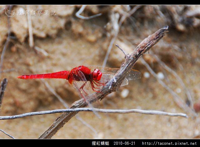 猩紅蜻蜓_04.jpg