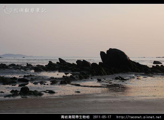 潮間帶生物_41.jpg