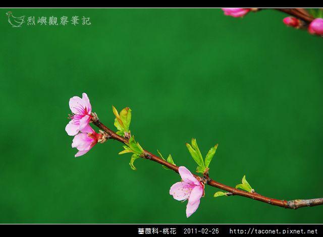 薔薇科-桃花_02.jpg