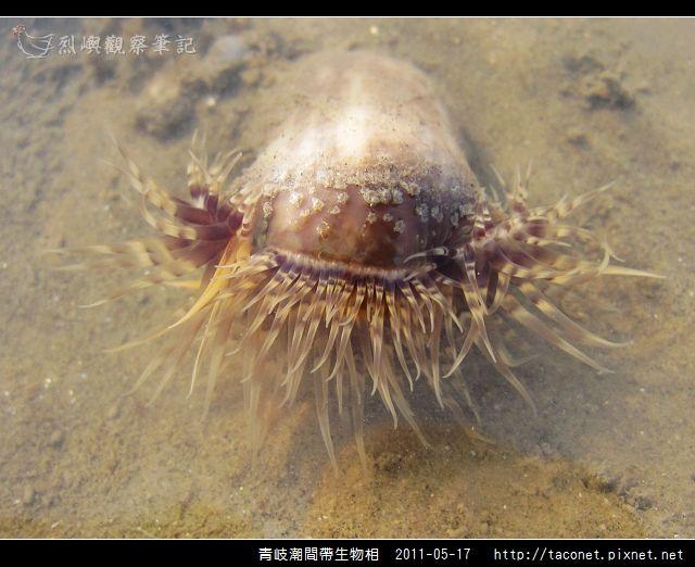 潮間帶生物_50.jpg