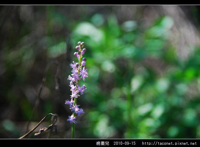 棉棗兒_05.jpg
