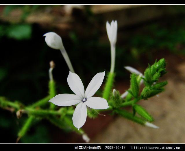 藍雪科-烏面馬_12.jpg