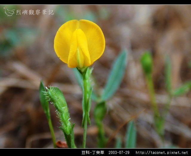 豆科-丁癸草_03.jpg