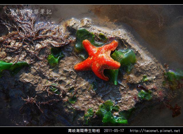 潮間帶生物_05.jpg
