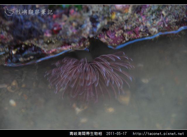 潮間帶生物_18.jpg