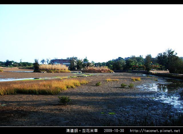 互花米草在清遠湖_01.jpg