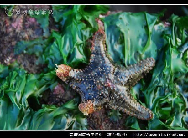 潮間帶生物_38.jpg