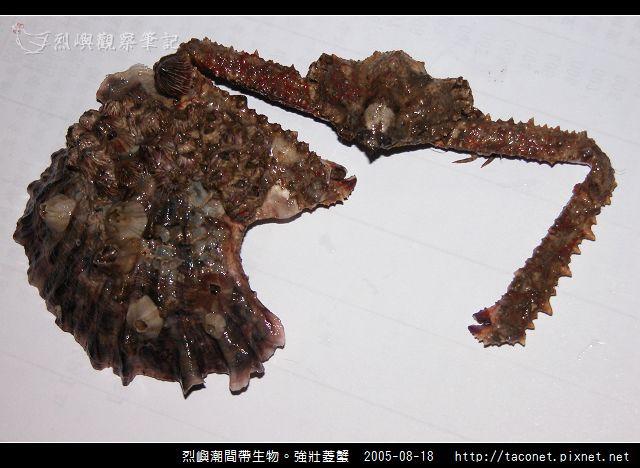 強壯菱蟹_02.jpg