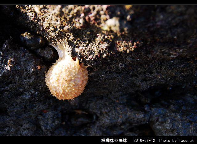 柑橘荔枝海綿_01.jpg