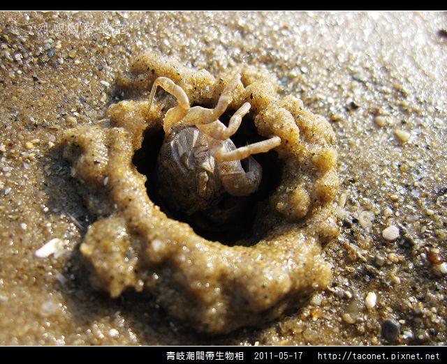 潮間帶生物_42.jpg