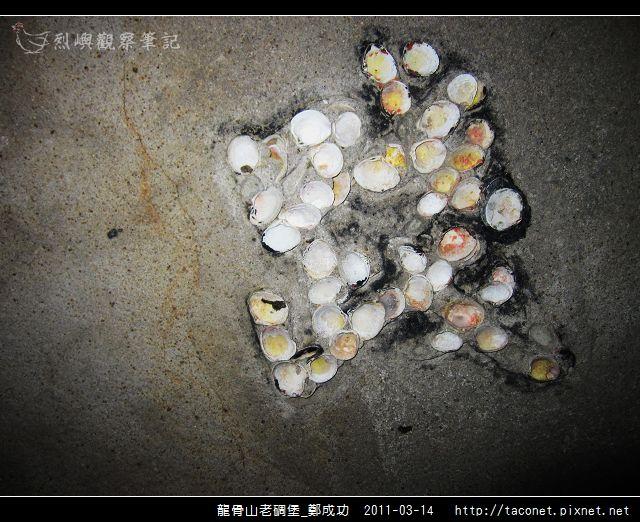 龍骨山老碉堡_鄭成功-39.jpg