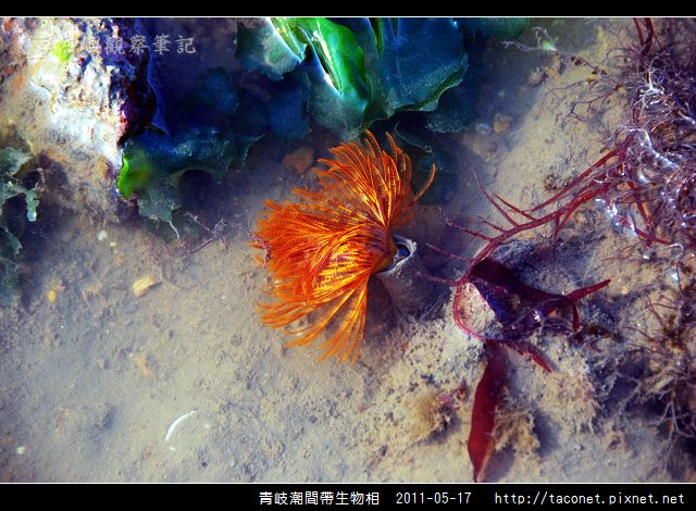 潮間帶生物_12.jpg