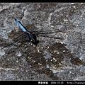 鼎脈蜻蜓_01.jpg