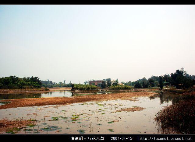 互花米草在清遠湖_09.jpg