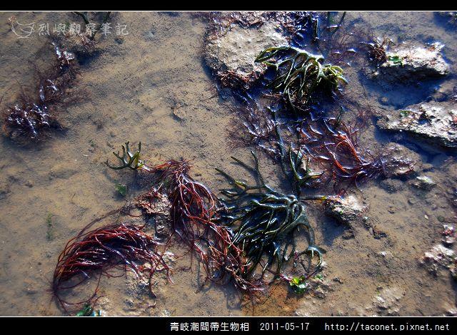 潮間帶生物_06.jpg