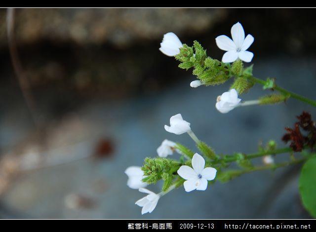 藍雪科-烏面馬_11.jpg