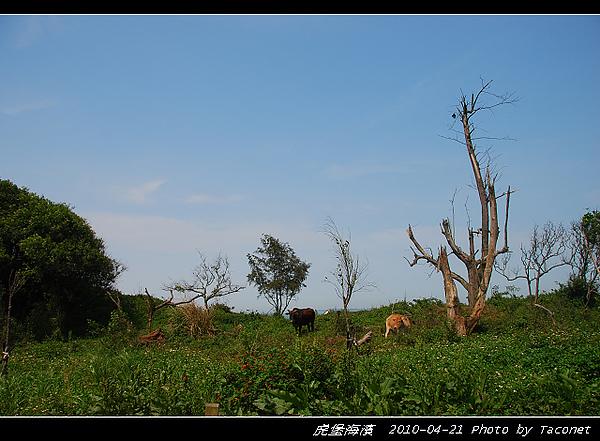 虎堡海濱_03.jpg