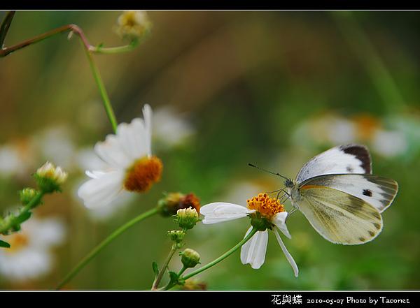 花與蝶-09.jpg