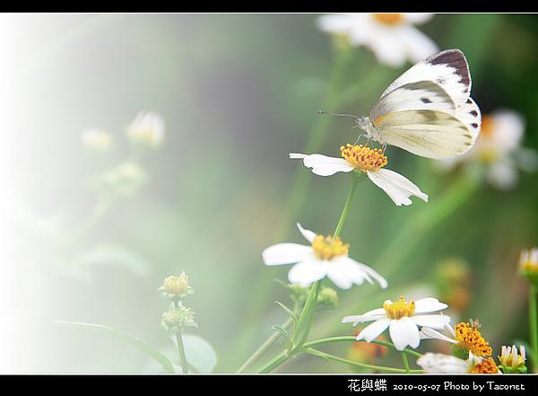 花與蝶-01.jpg