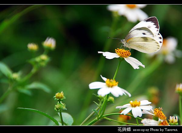花與蝶-02.jpg