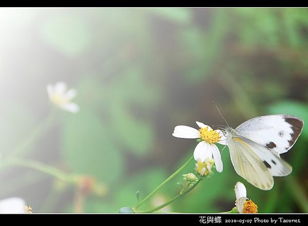 花與蝶-03.jpg