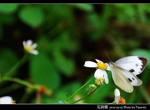 花與蝶-04.jpg