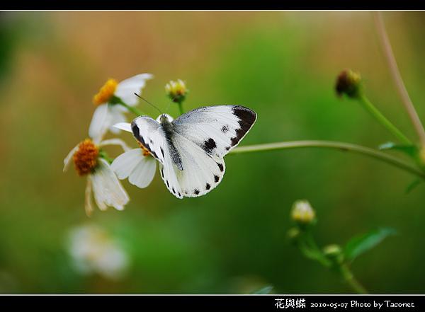花與蝶-05.jpg