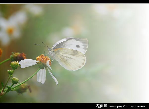 花與蝶-06.jpg