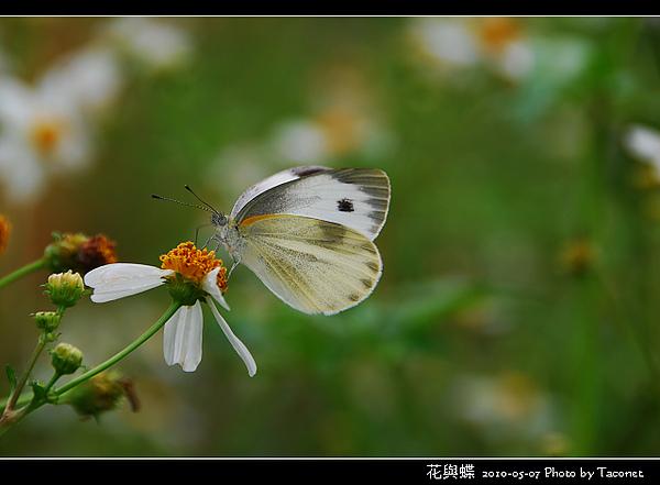 花與蝶-07.jpg