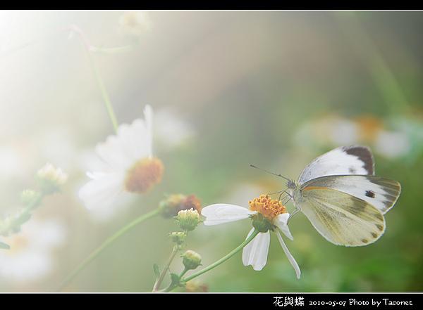 花與蝶-08.jpg