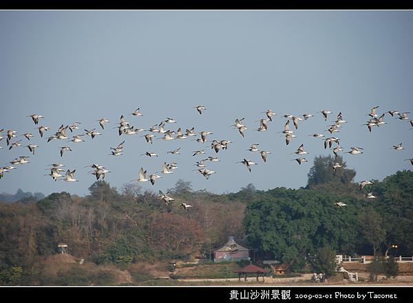貴山沙洲景觀_67.jpg